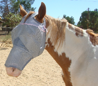 This Pink ribbon UV Rated Long fly mask by Cashel blocks 70% of the sun's rays protecting your horse with a unique design that stays put while your horse is stalled or turned out in the pasture